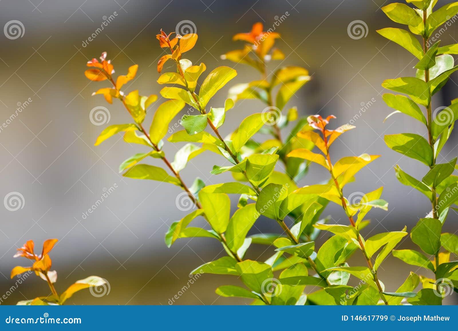 Ramas hermosas de las hojas que brillan en luz del sol