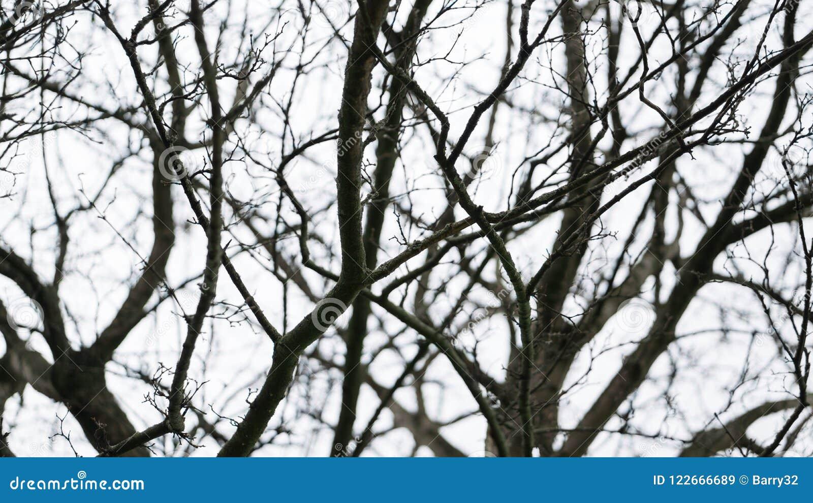 Ramas negras desnudas rígidas en invierno contra un cielo cubierto blanco