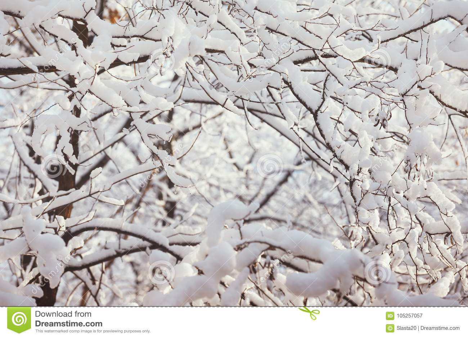 Ramas nevadas, fondo único de la naturaleza