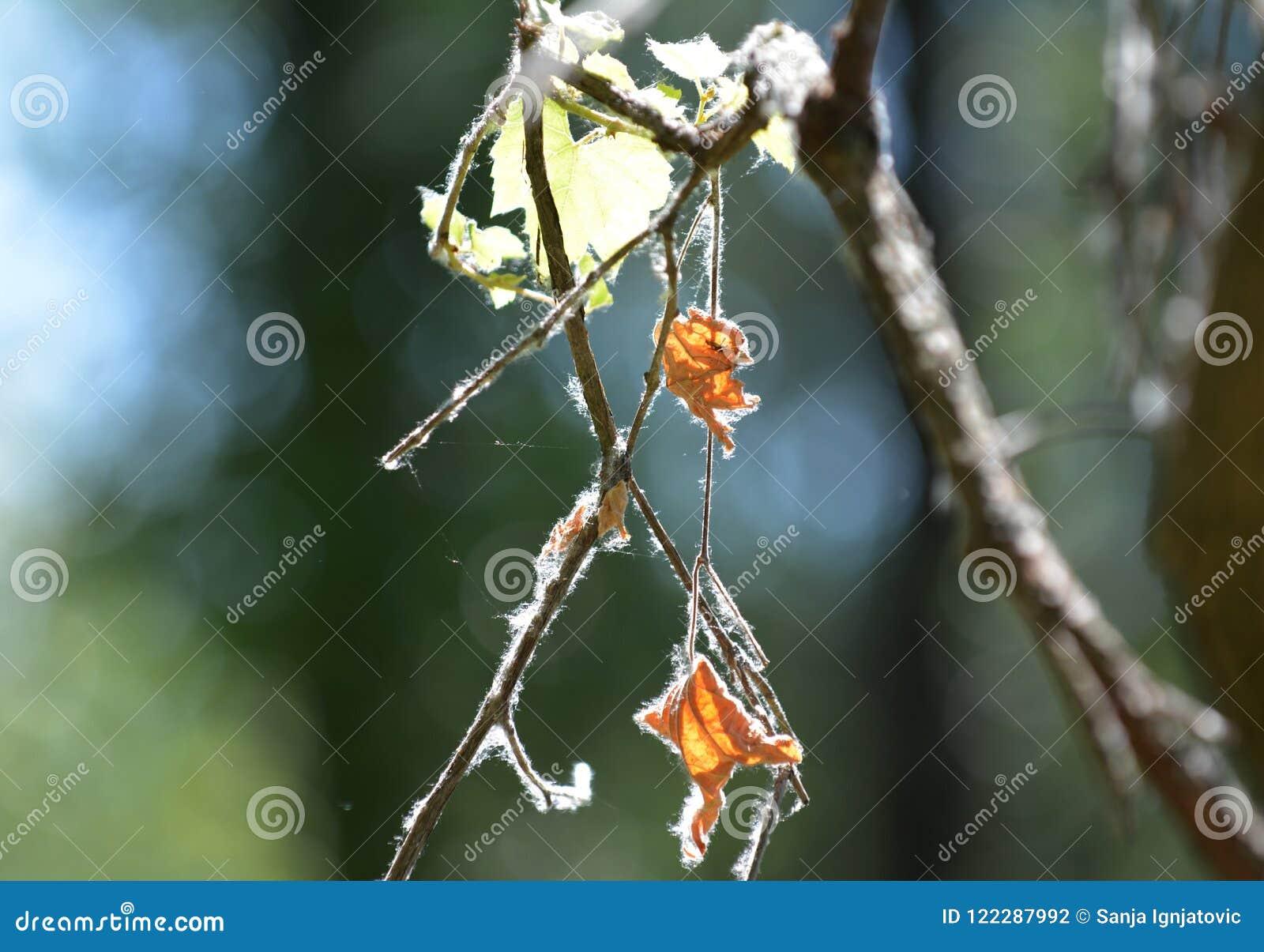 Ramas y hojas en naturaleza durante verano