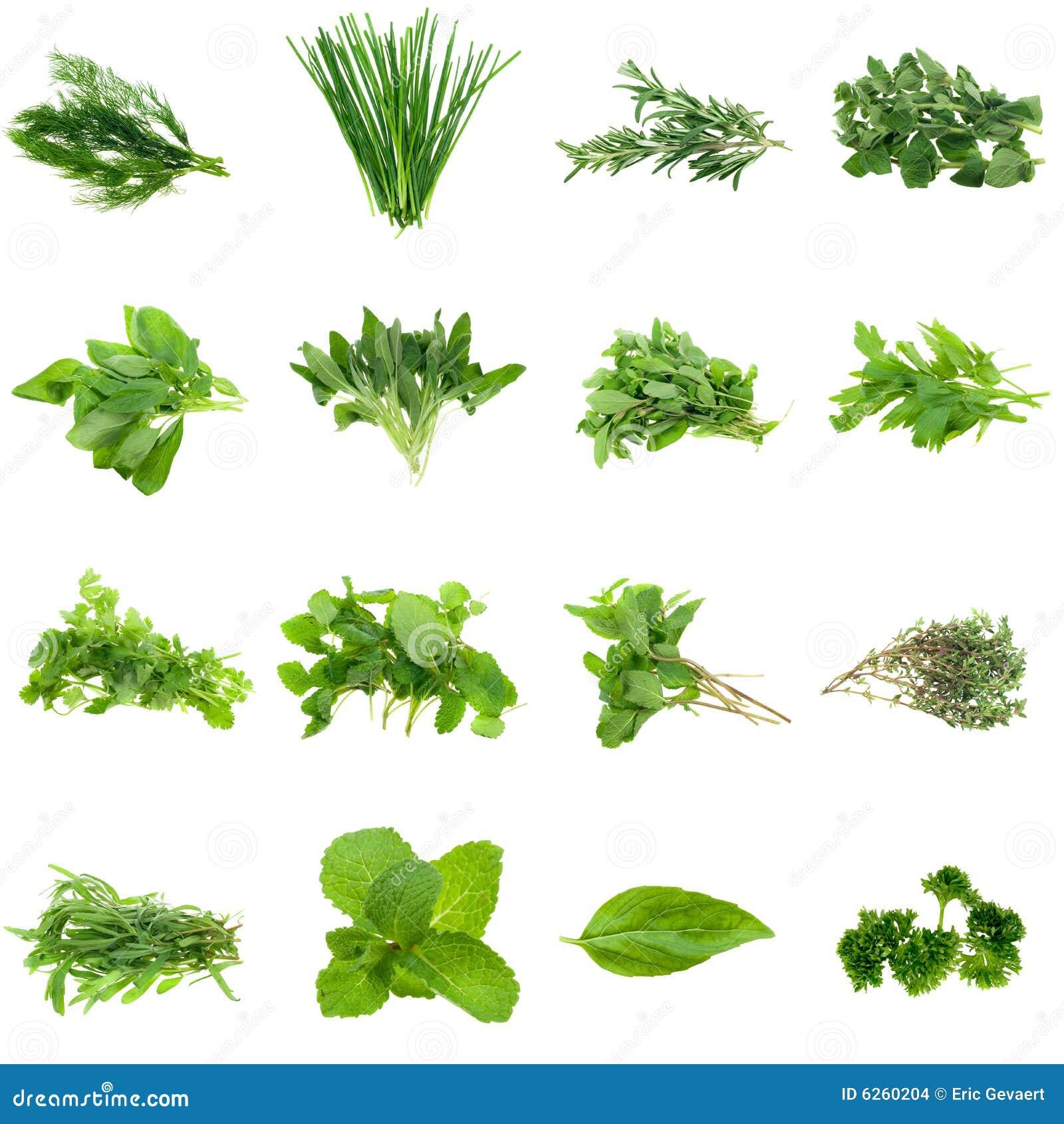 Ramassage d herbes
