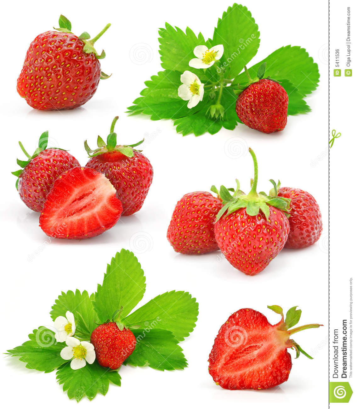 Ramassage de fruits rouges de fraise d isolement