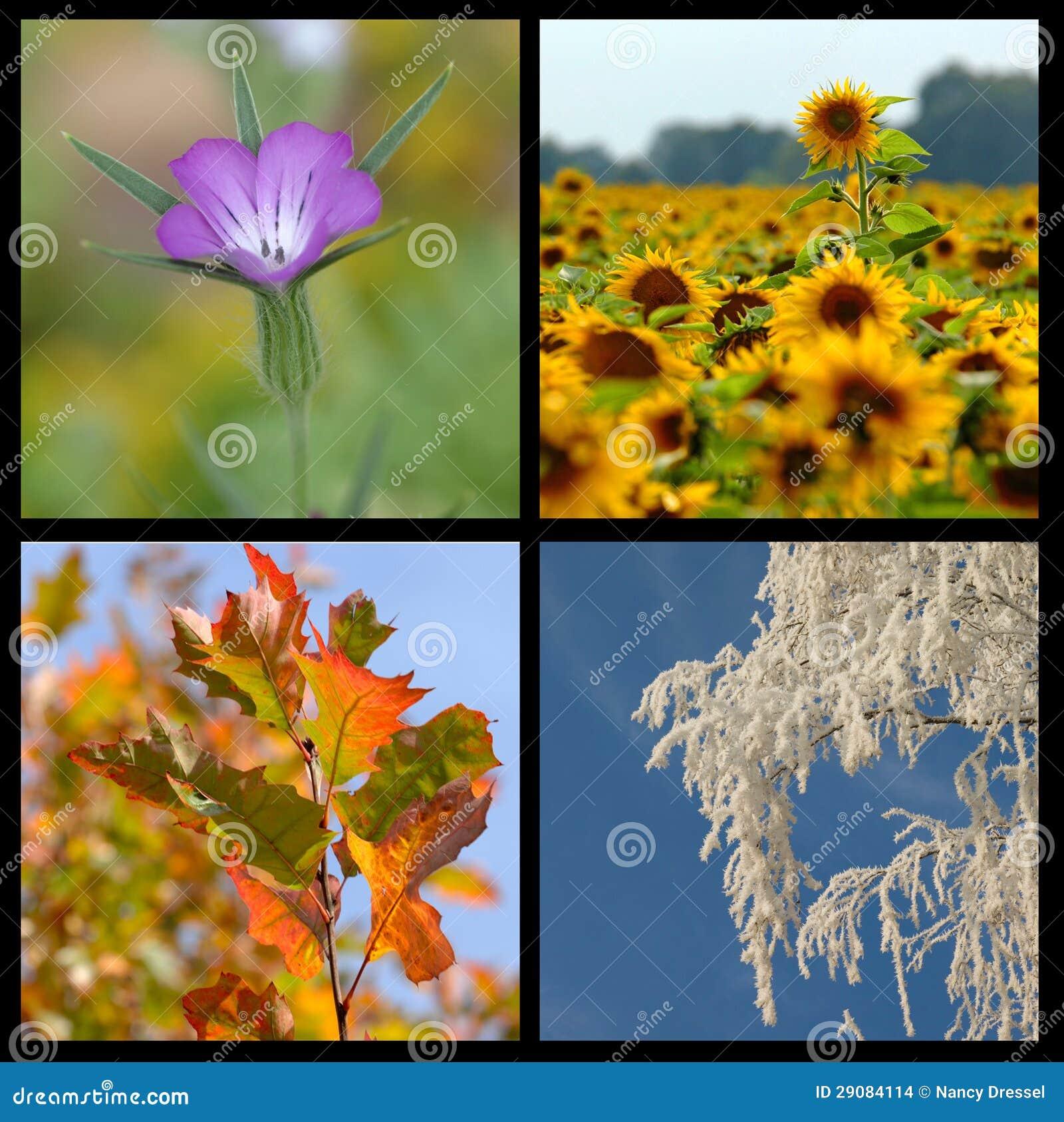 ramassage de quatre saisons photo stock image 29084114