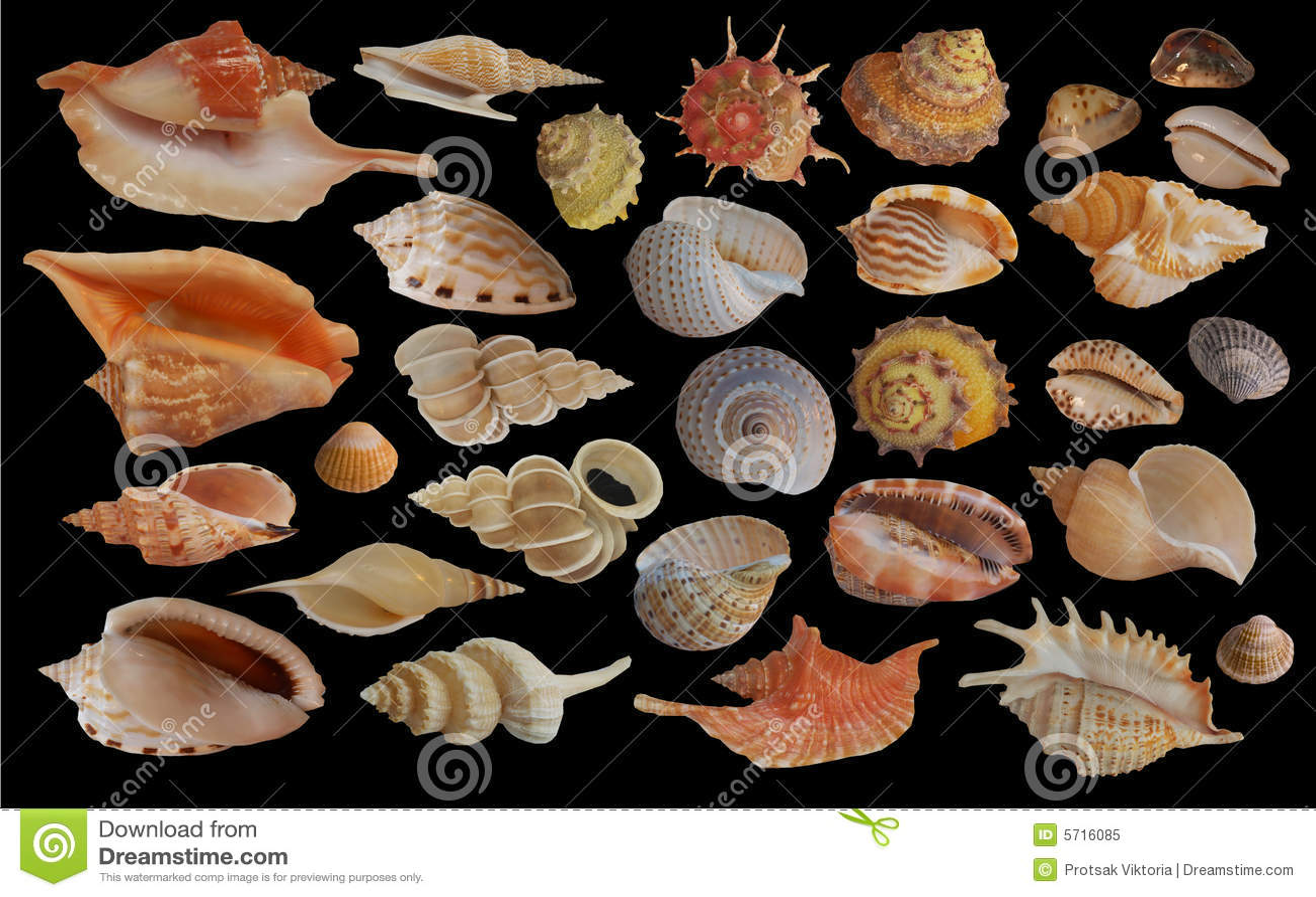 Ramassage de Seashell