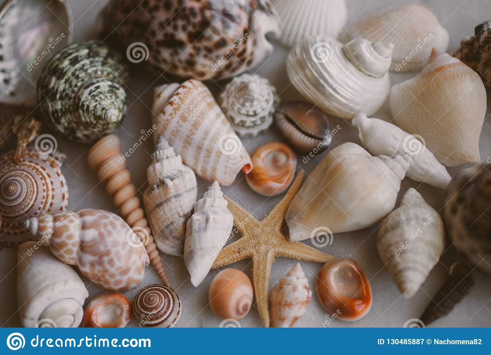 Ramassage de Seashell La vue haute étroite de beaucoup de coquillages a empilé ensemble comme texture et fond