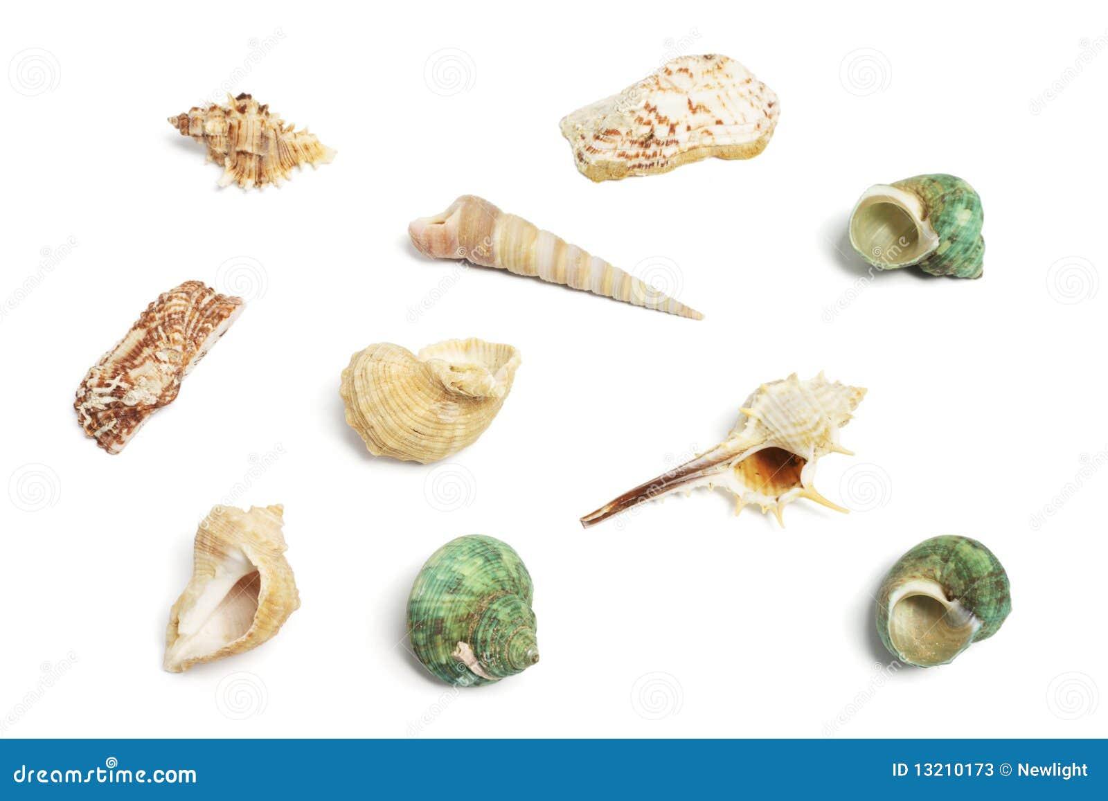 Ramassage de Seashells