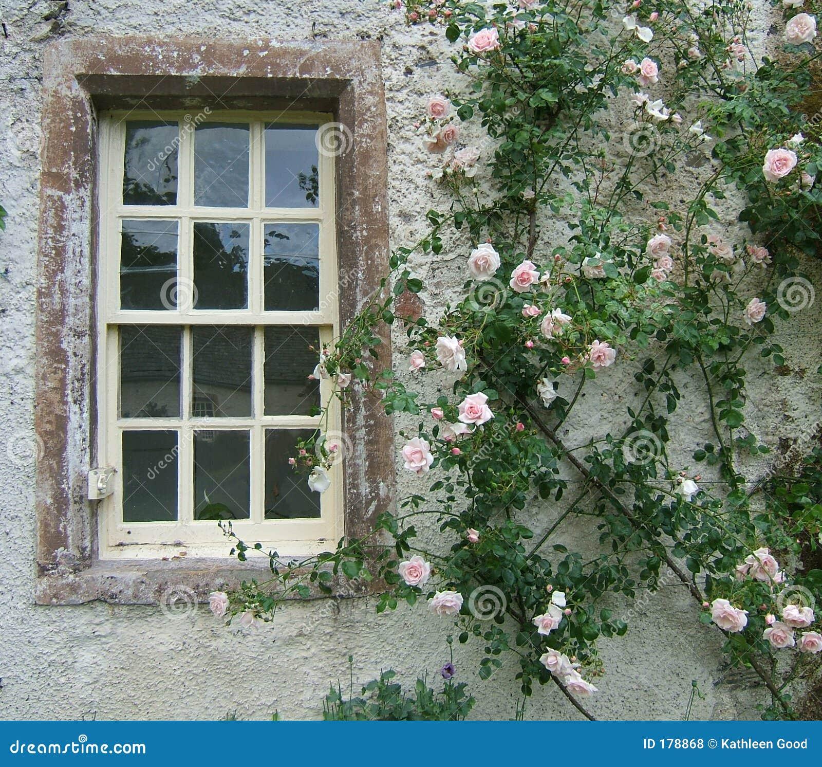 Rambling Rose Stock Photo Image Of Window Historic