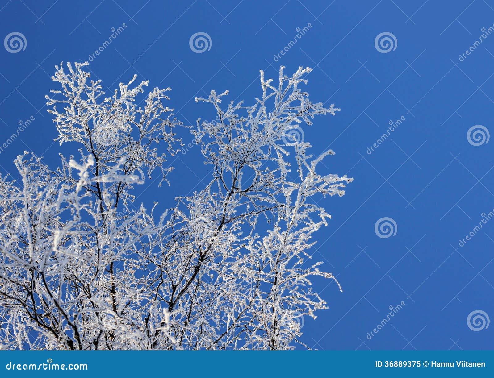 Download Rami Congelati Contro Cielo Blu Immagine Stock - Immagine di tempo, radura: 36889375