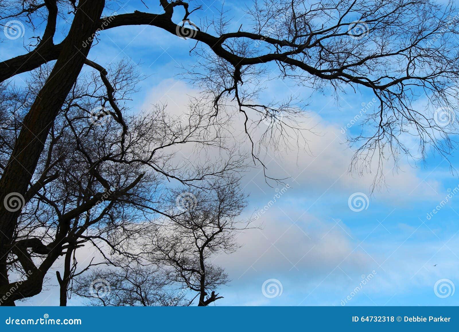 Rami contro il cielo blu