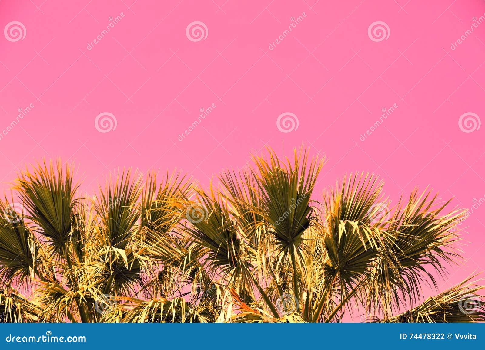 Rami d annata rosa delle palme