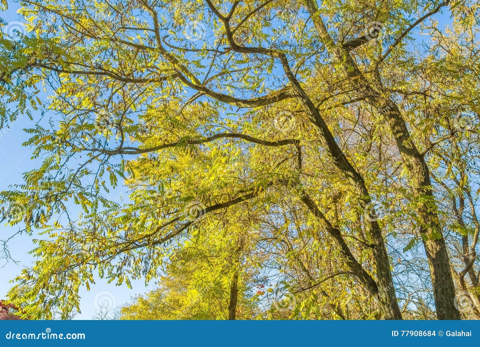 il fogliame di un albero