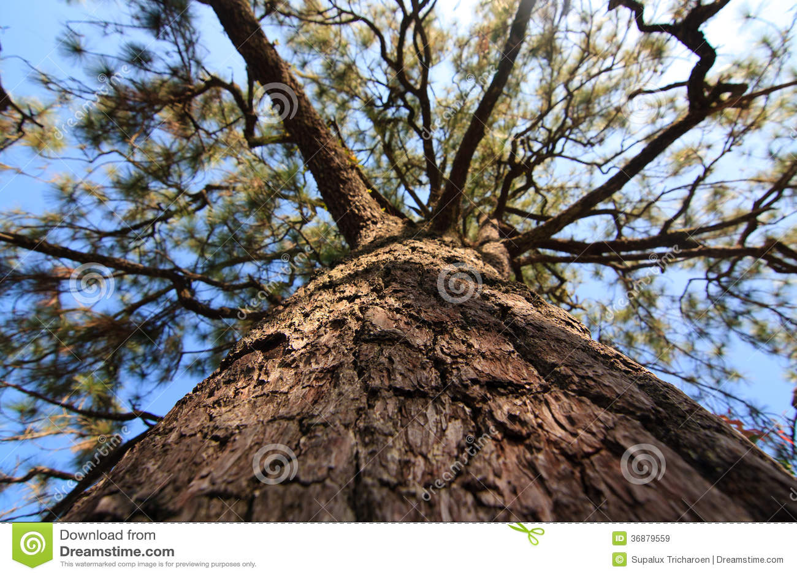 Download Rami dell'albero immagine stock. Immagine di verde, filiali - 36879559
