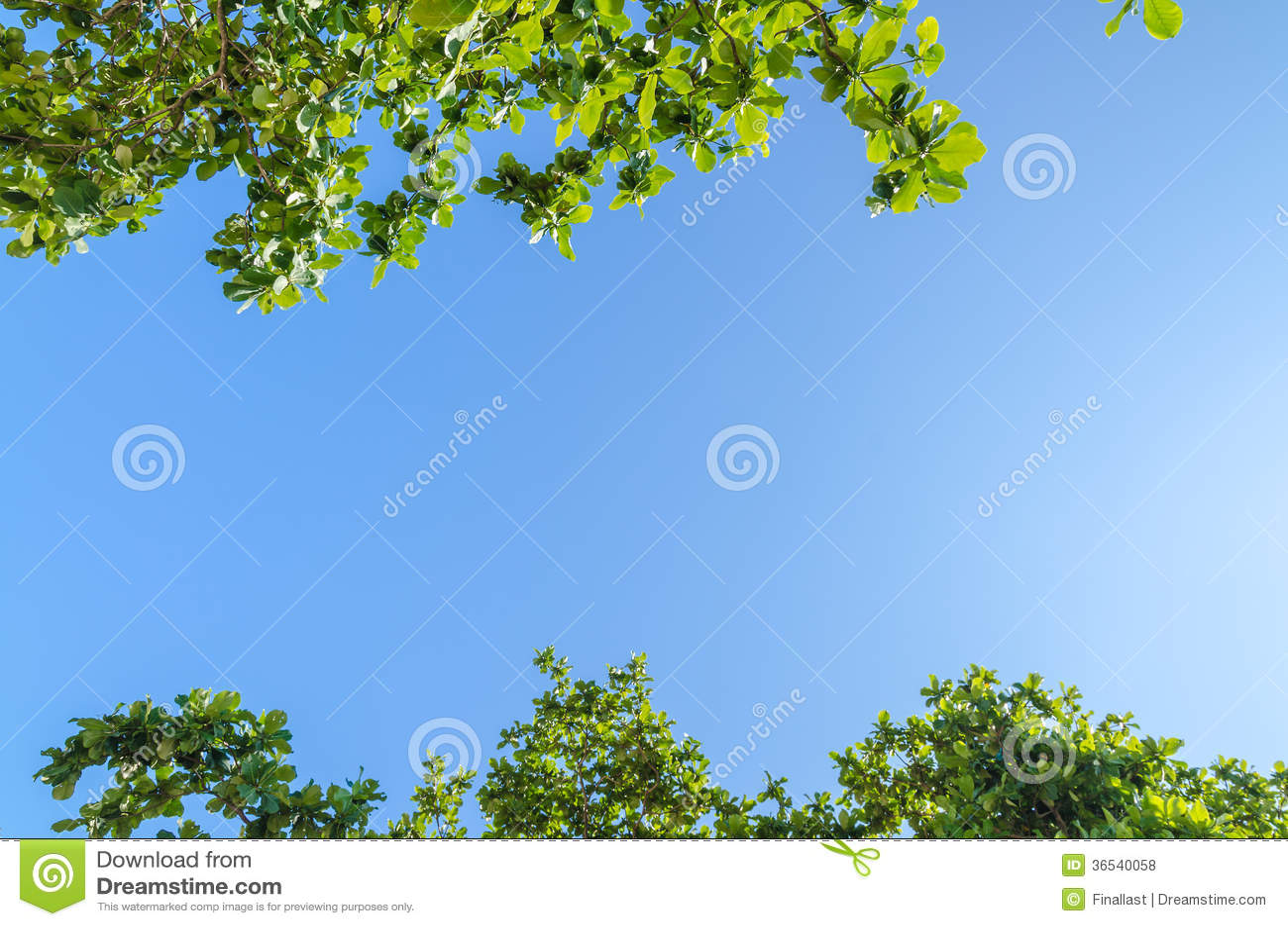 Rami di albero con le foglie contro cielo blu