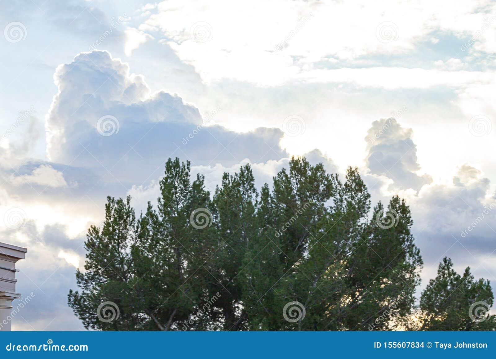 Rami di albero sempreverdi contro epanse enorme del cielo con le nuvole di nimbus del cumulo