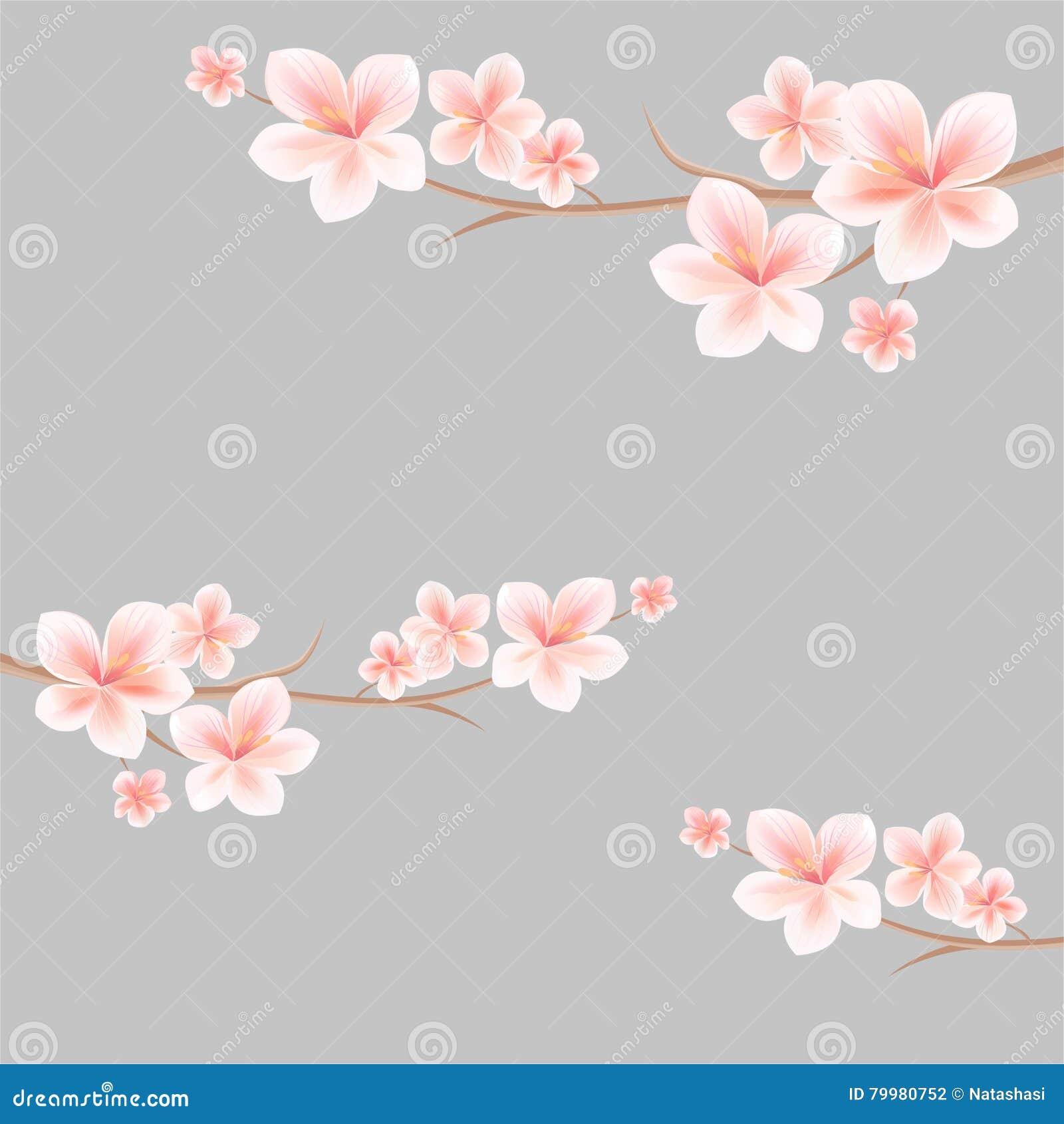 Rami di sakura con i fiori bianchi rosa-chiaro su fondo grigio chiaro fiori dell Apple-albero Cherry Blossom Vettore