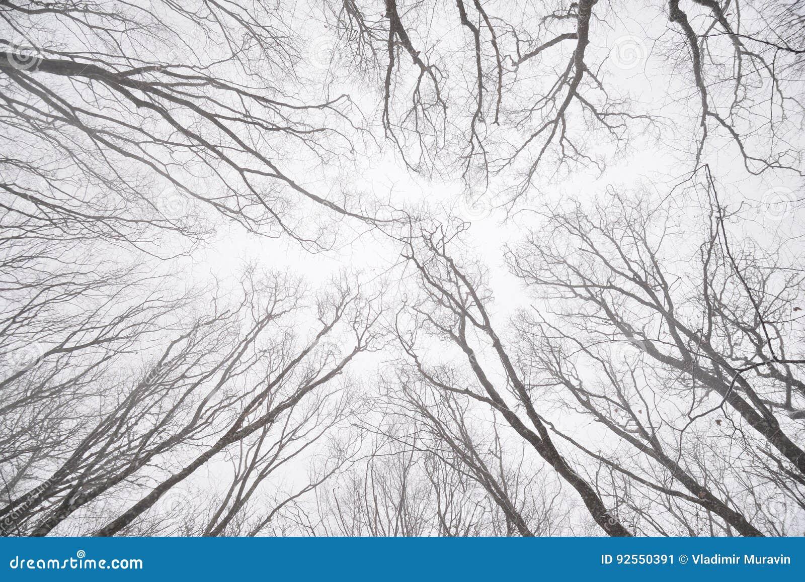 Rami nudi degli alberi nella foresta di inverno