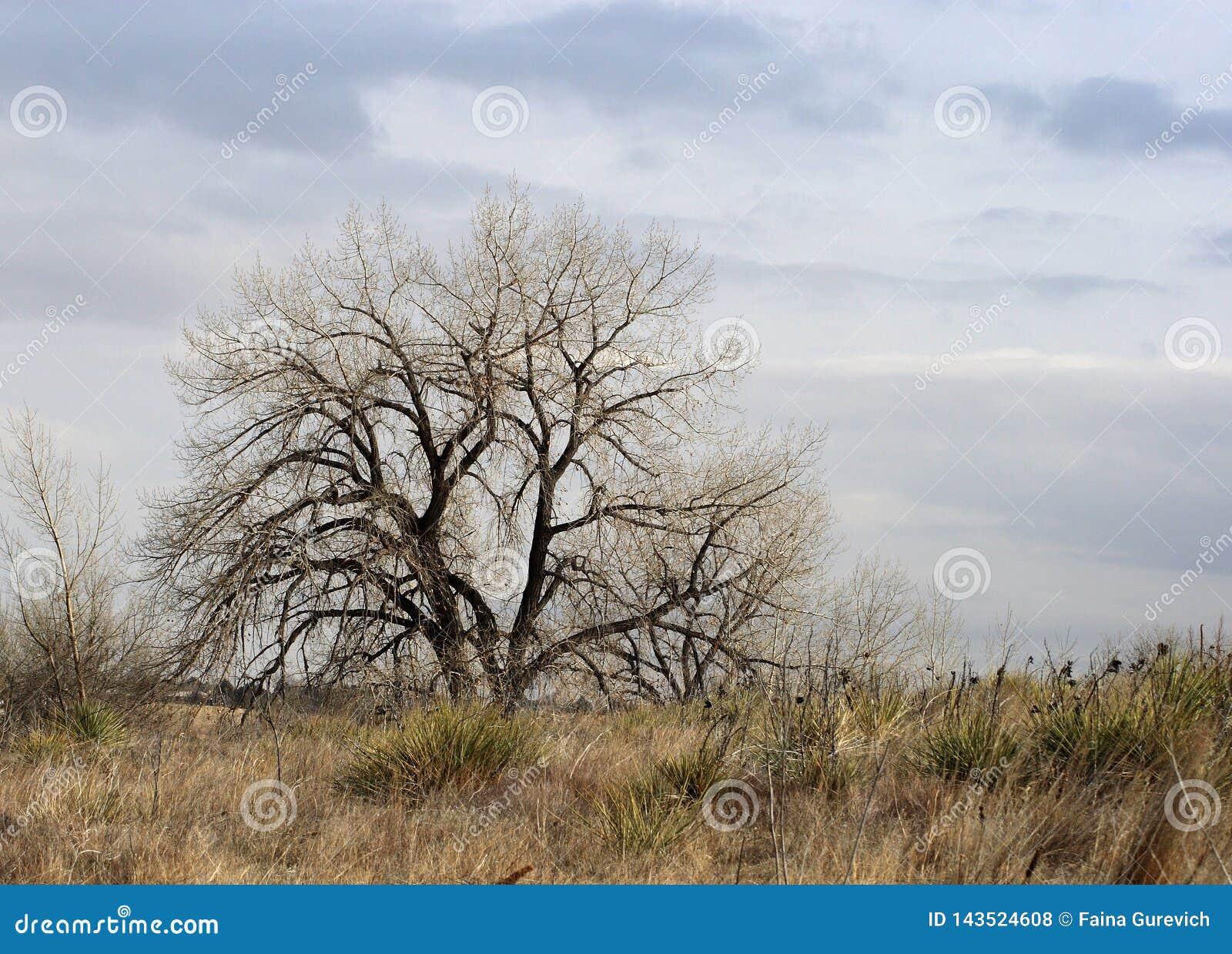 Rami nudi di un albero, orario invernale