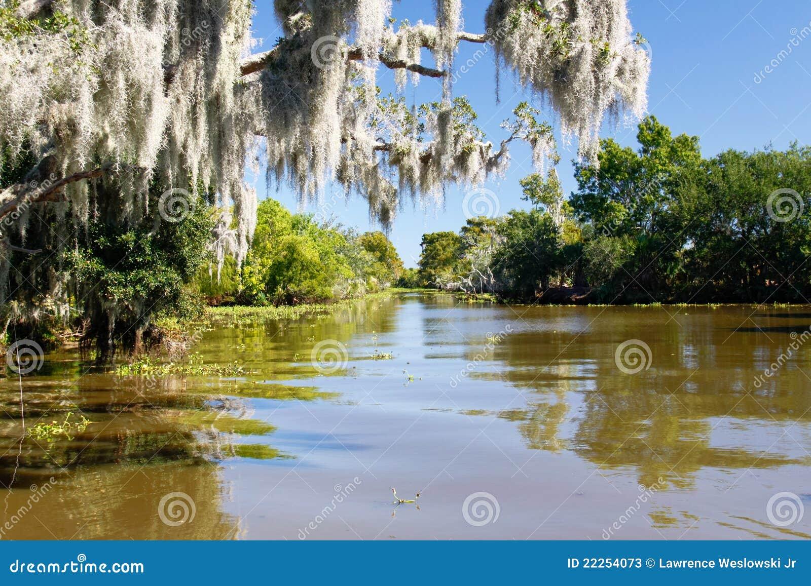 Rami paludosi di fiume e muschio spagnolo