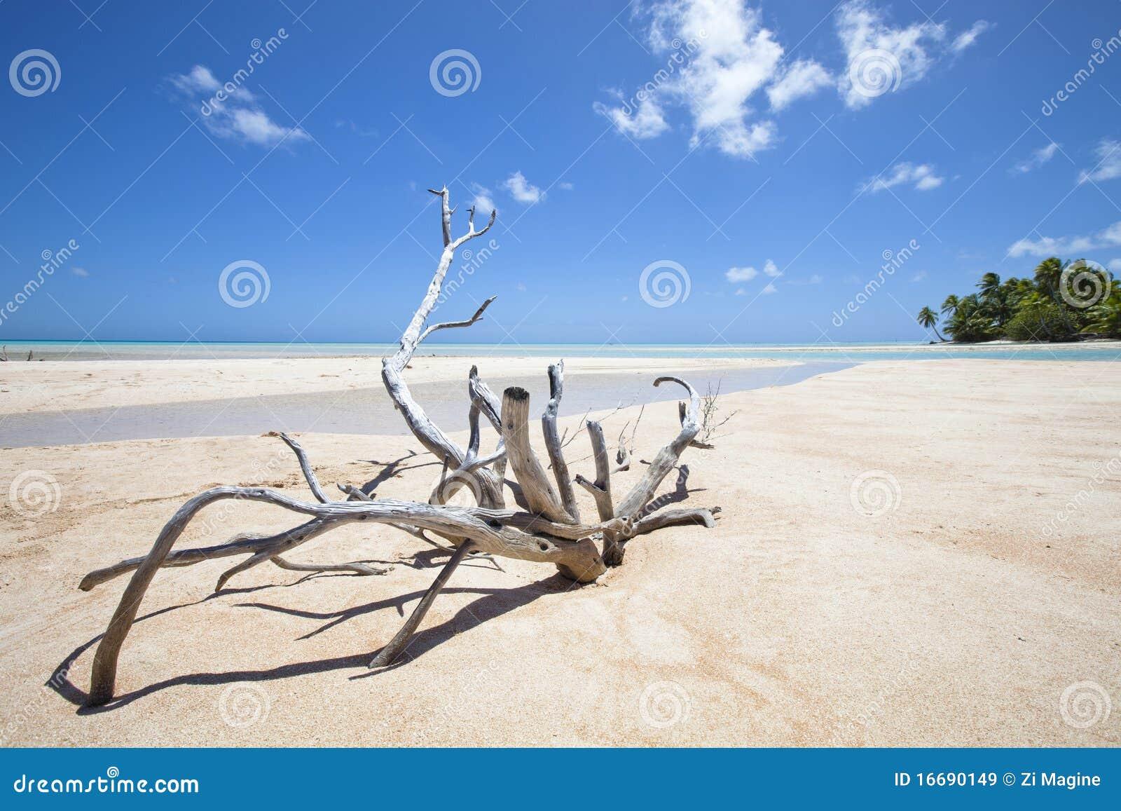 Rami secchi sulla spiaggia bianca della sabbia immagine for Disegni moderni della casa sulla spiaggia