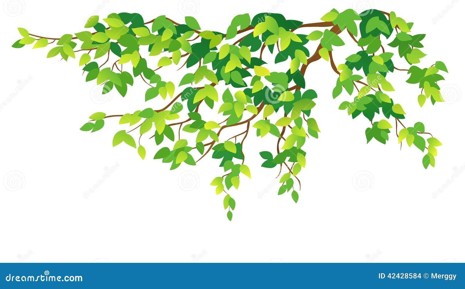 Ramificación de árbol verde