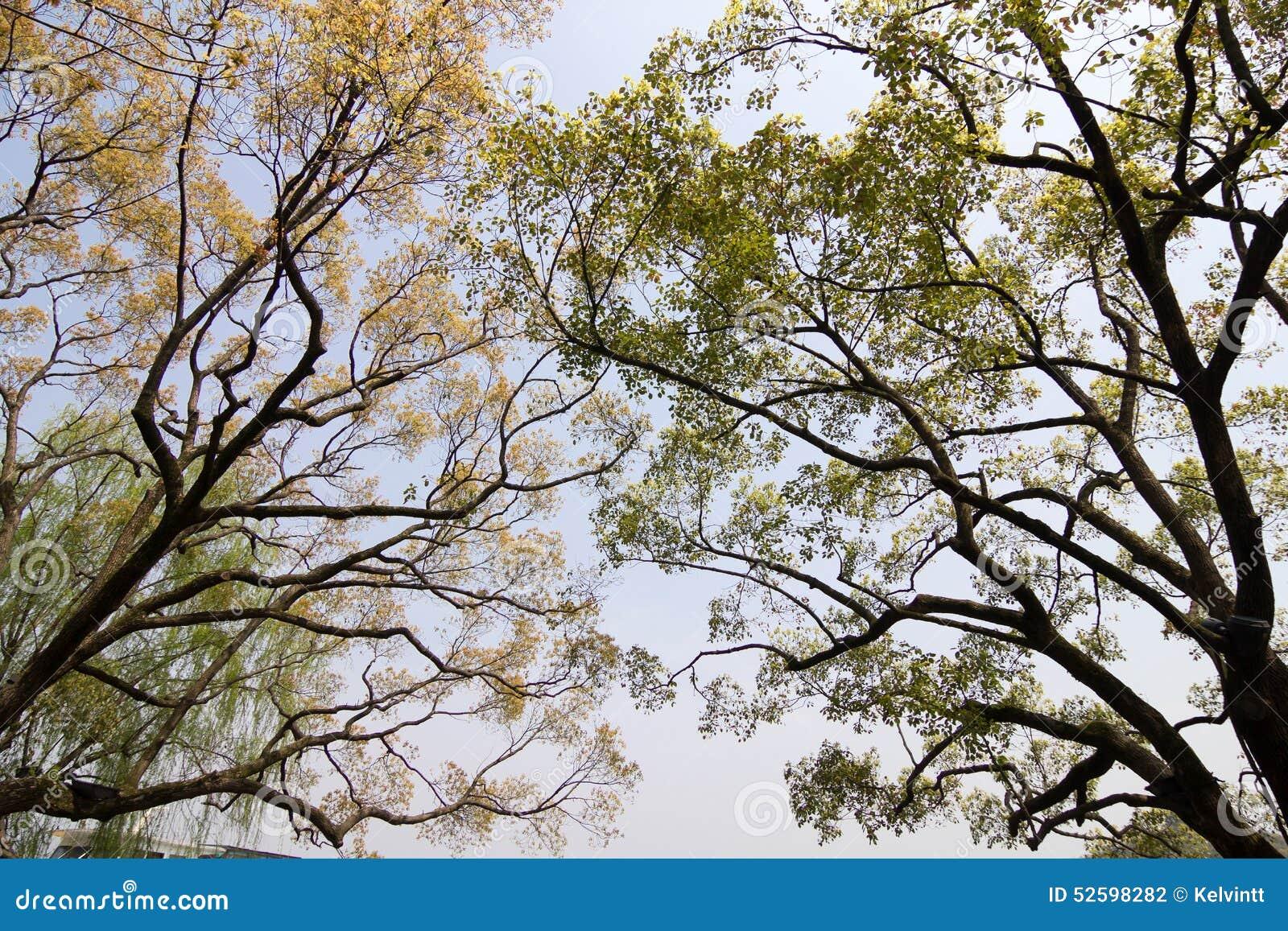 Ramificaciones de árboles