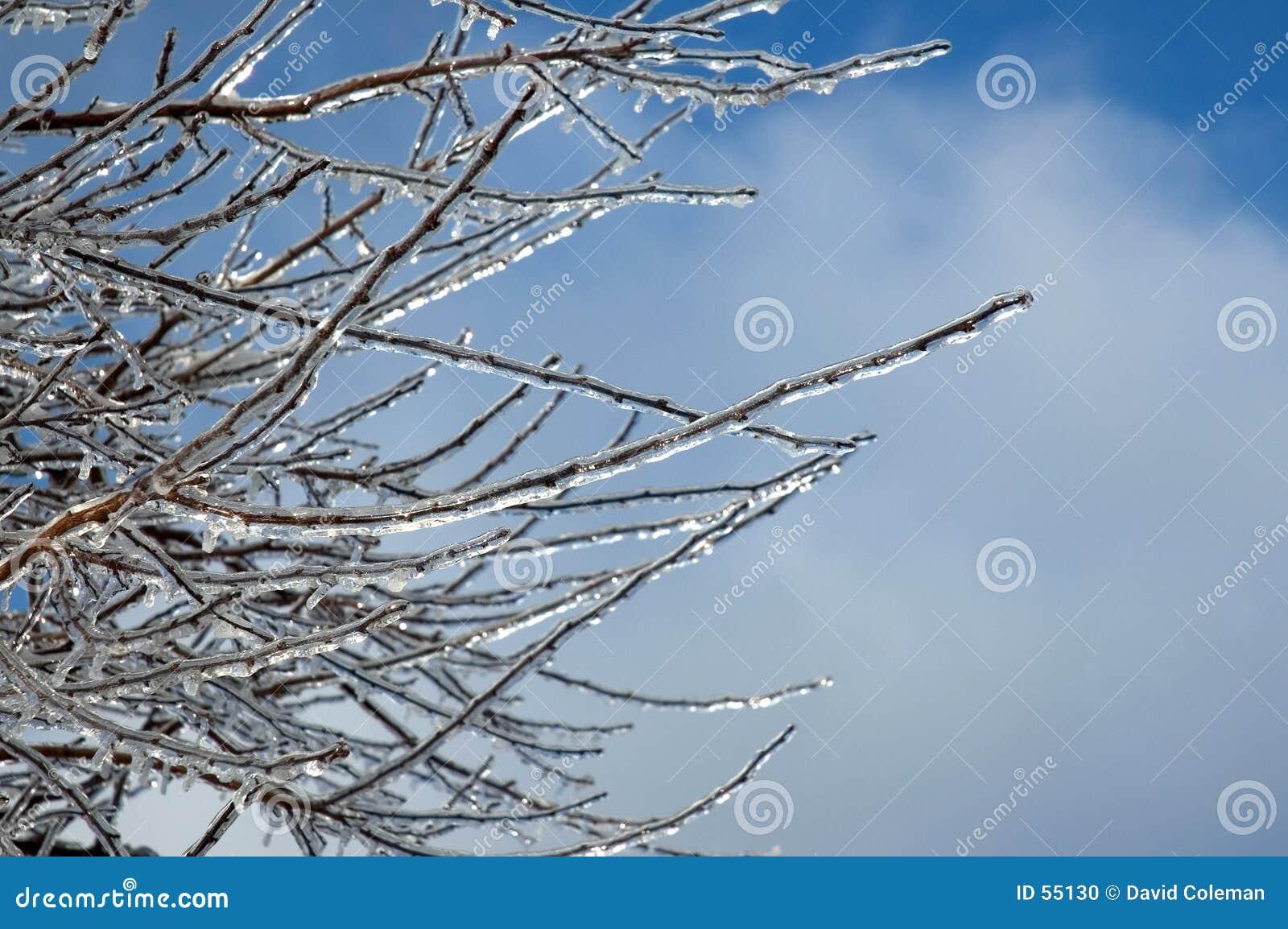 Ramificaciones heladas contra un cielo azul
