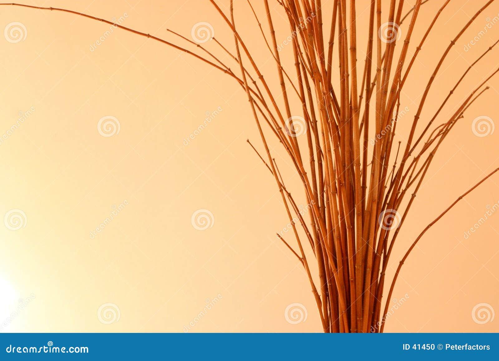 Download Ramita foto de archivo. Imagen de árbol, adorne, diverso - 41450