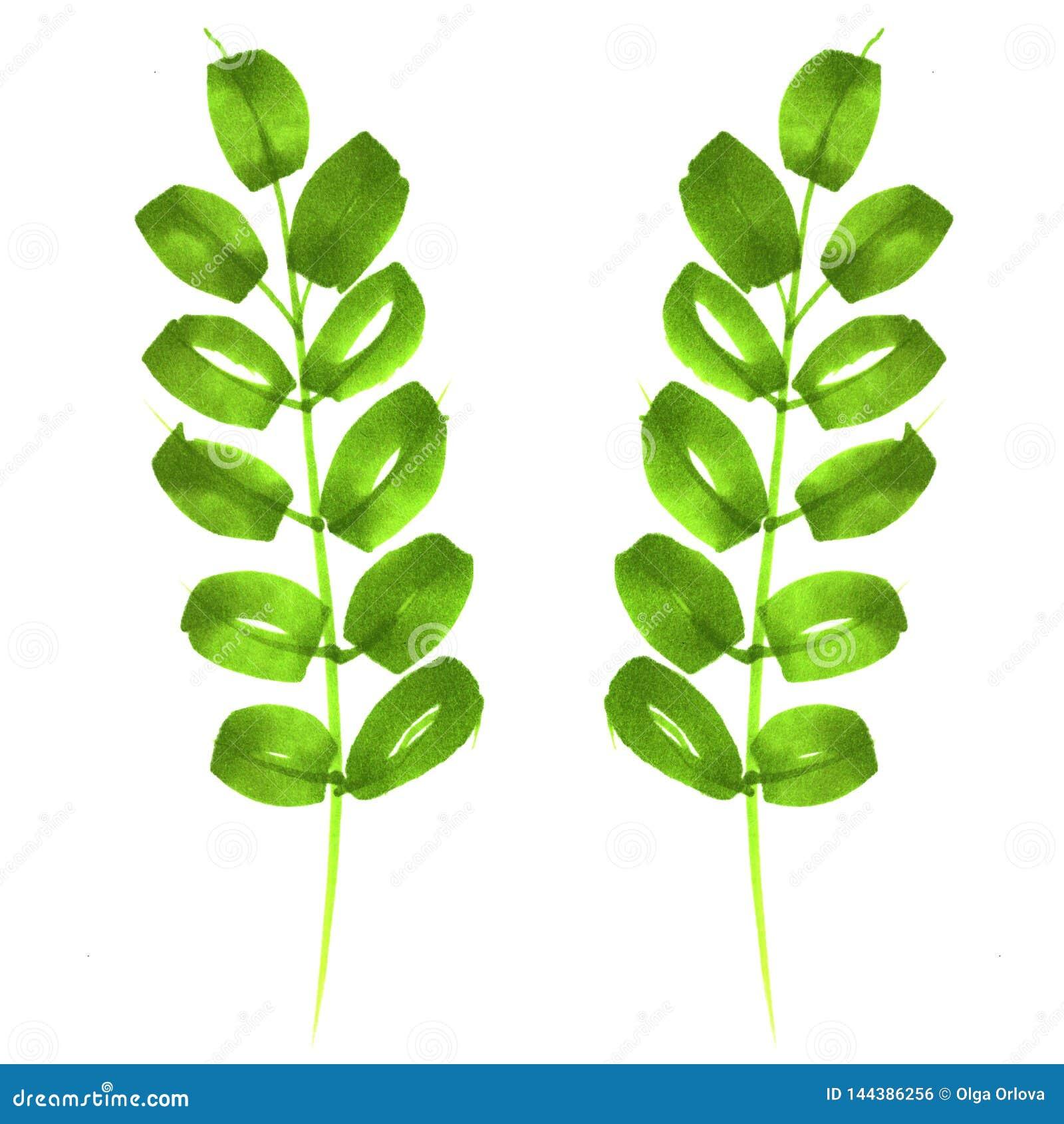 Ramita con las hojas dibujadas por los marcadores Verde, primavera, verano