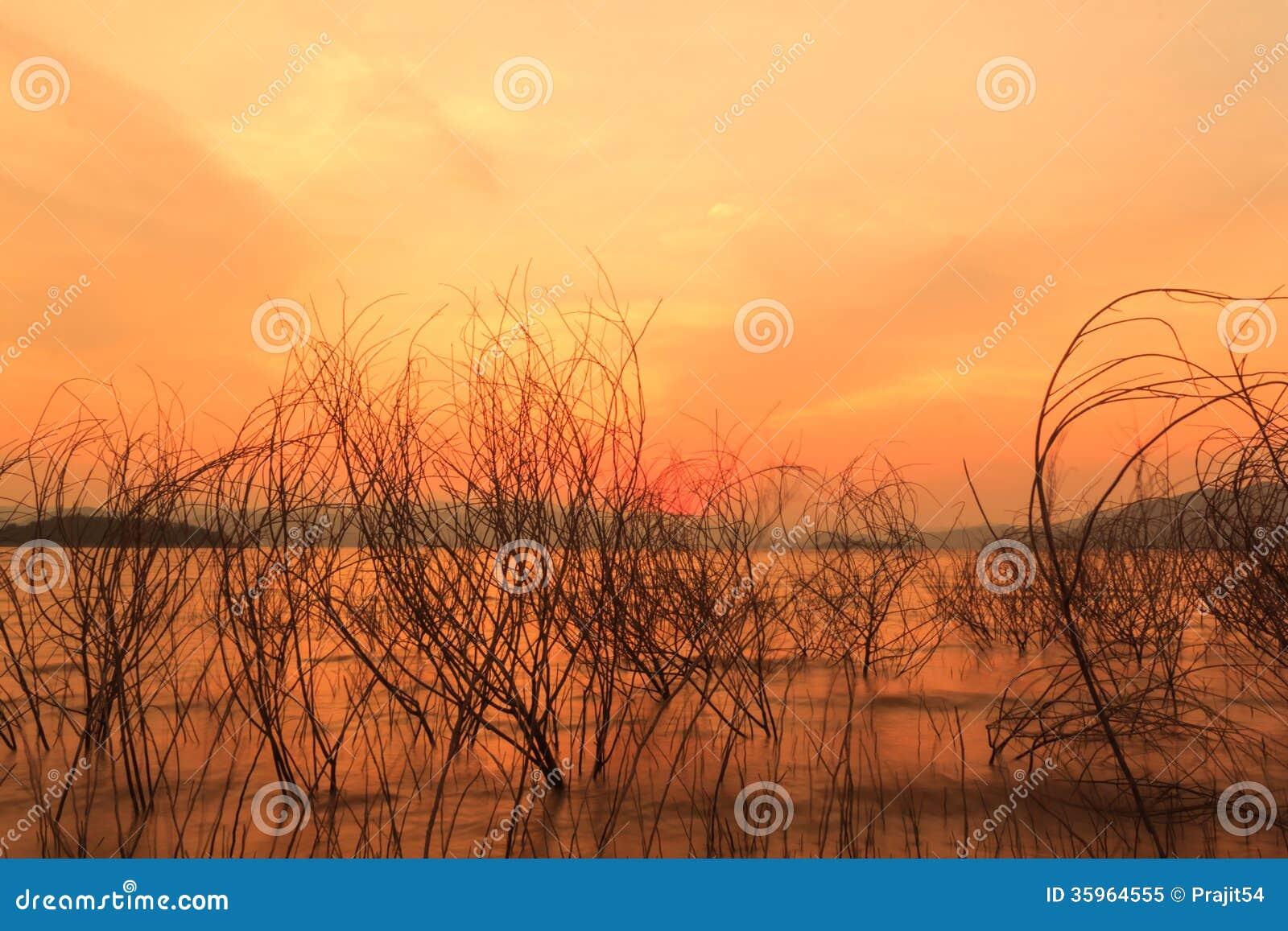 Ramitas y puesta del sol