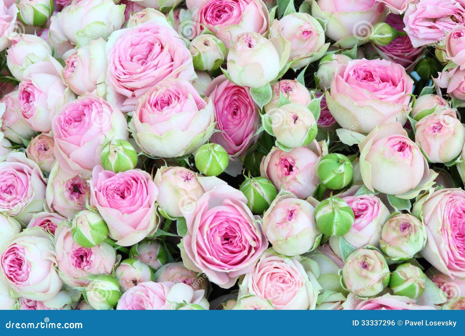 Ramo brillante grande recientemente de rosas grandes del - Ramos de flores grandes ...