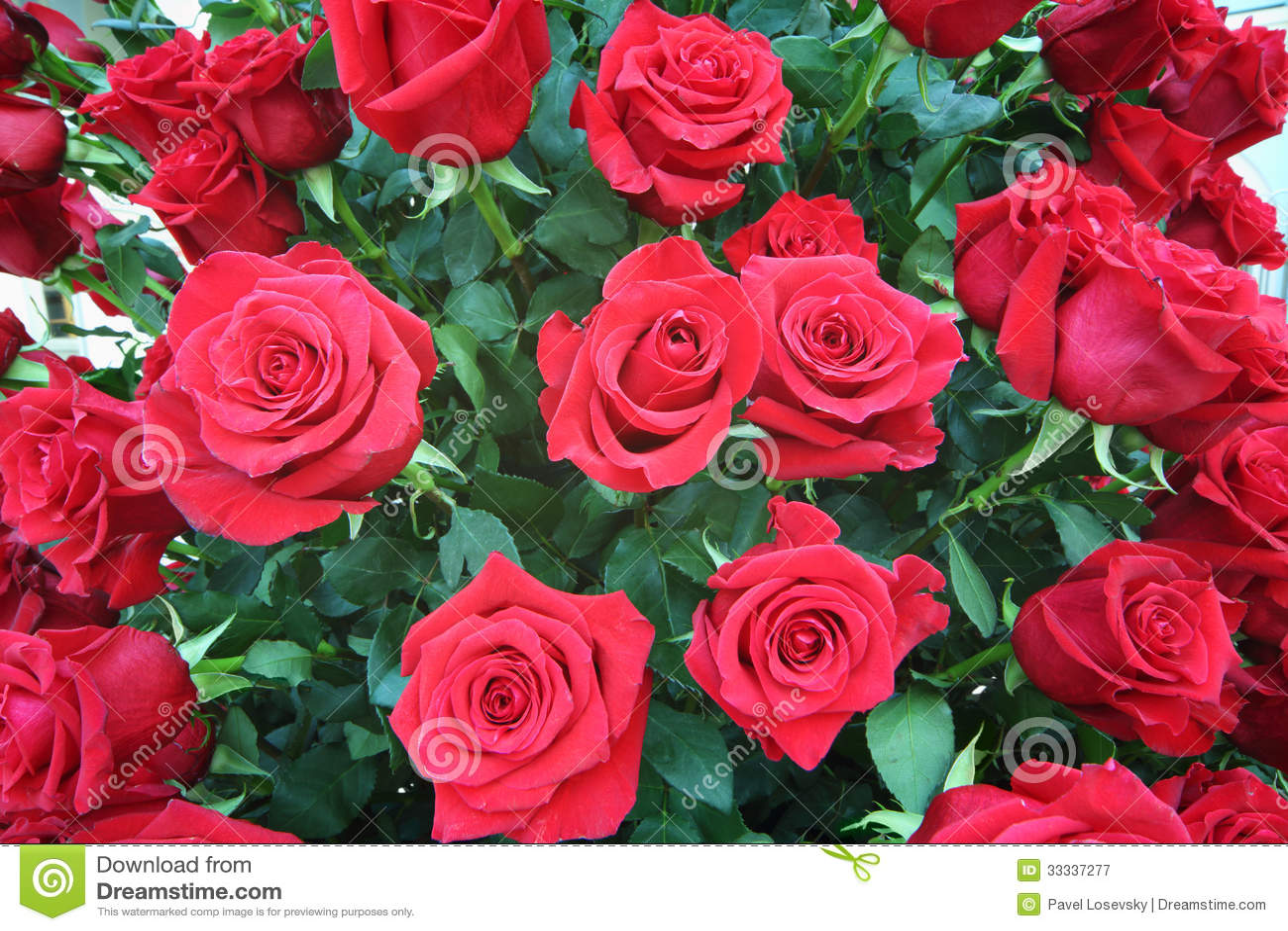 Ramo brillante grande recientemente de rosas rojas grandes - Ramos de flores grandes ...