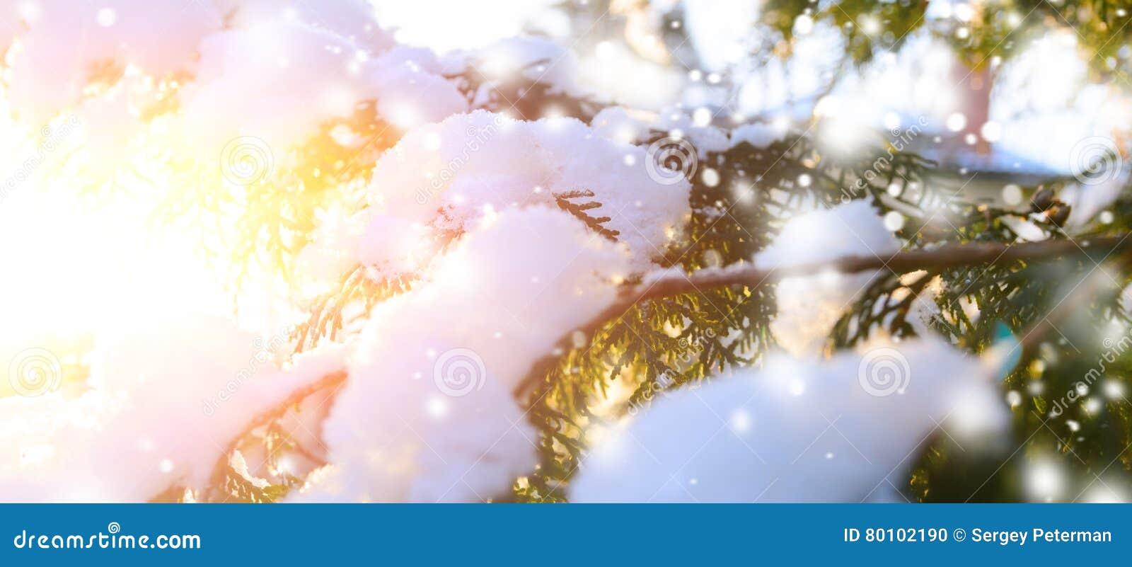 Ramo de árvore nevado no por do sol