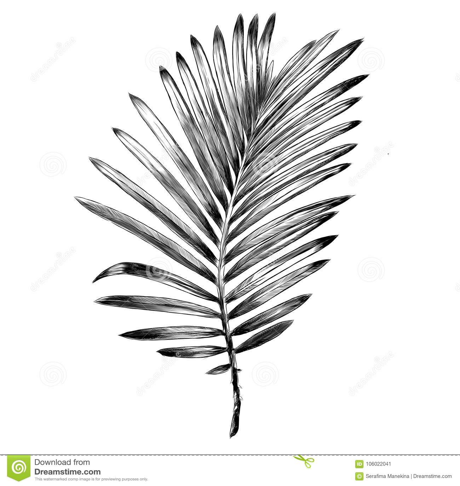 Ramo de gráficos de vetor do esboço da palmeira