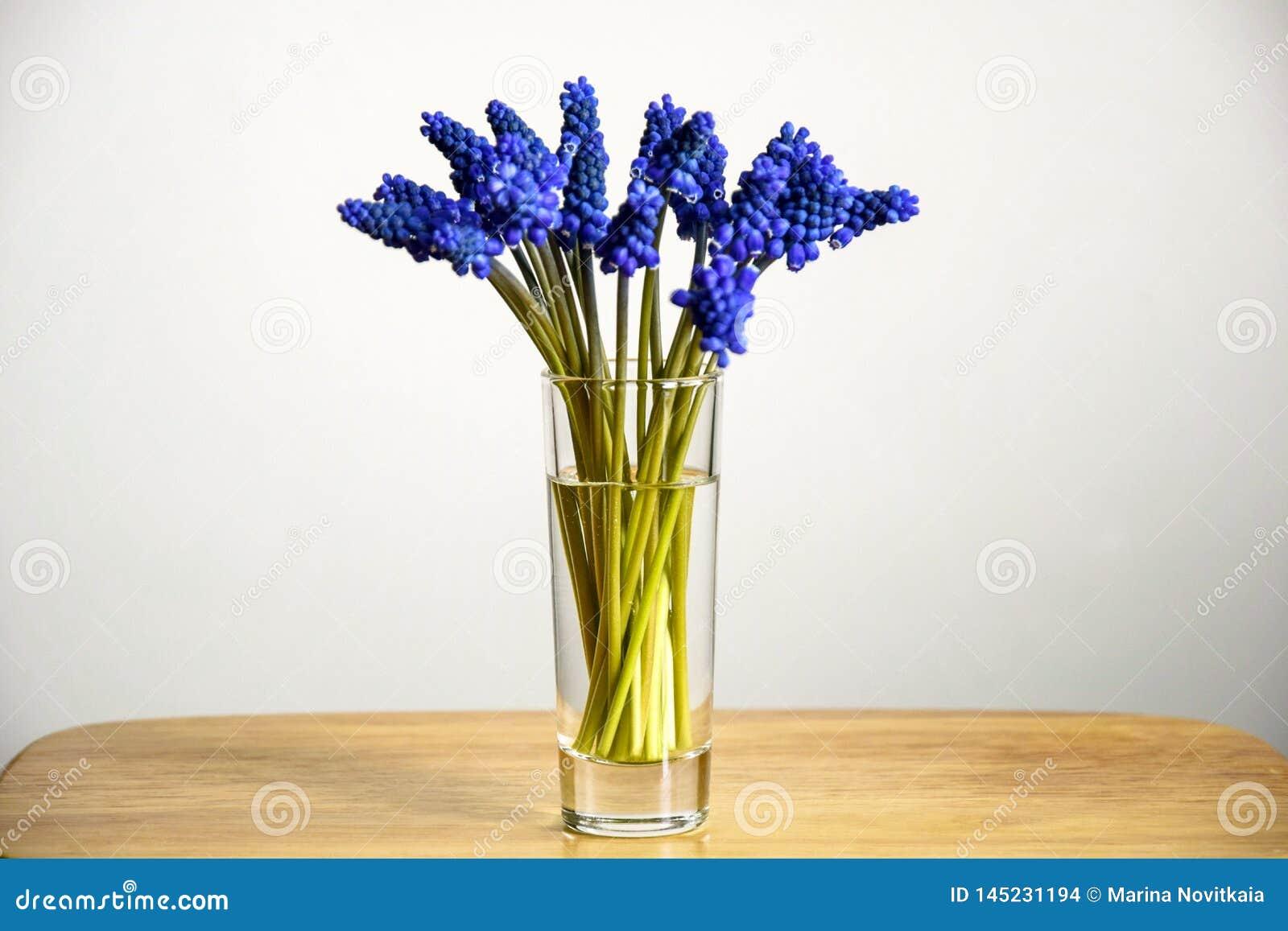 Ramo de jacintos de uva azules de las flores de la primavera