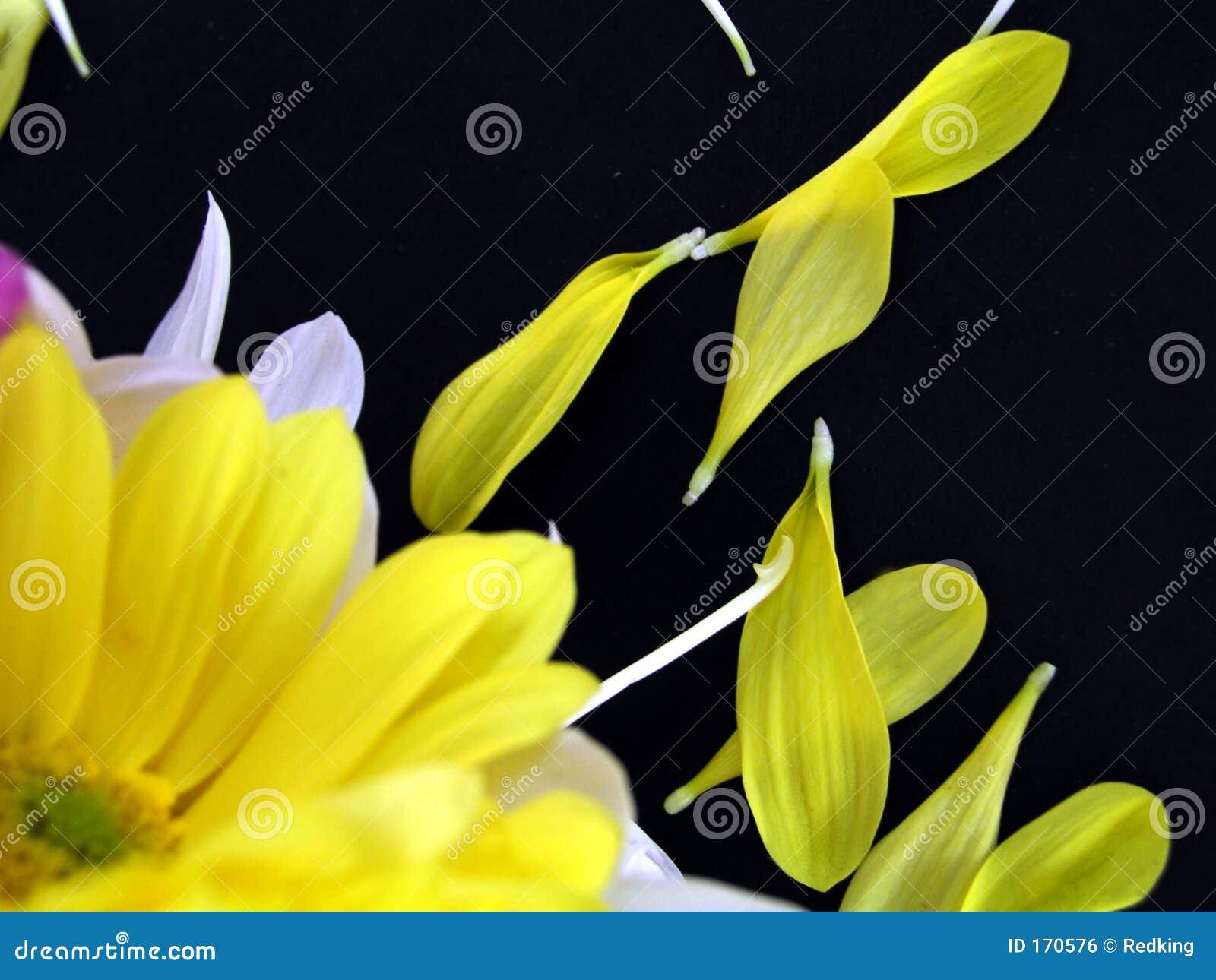 Ramo de la flor con los pétalos caidos