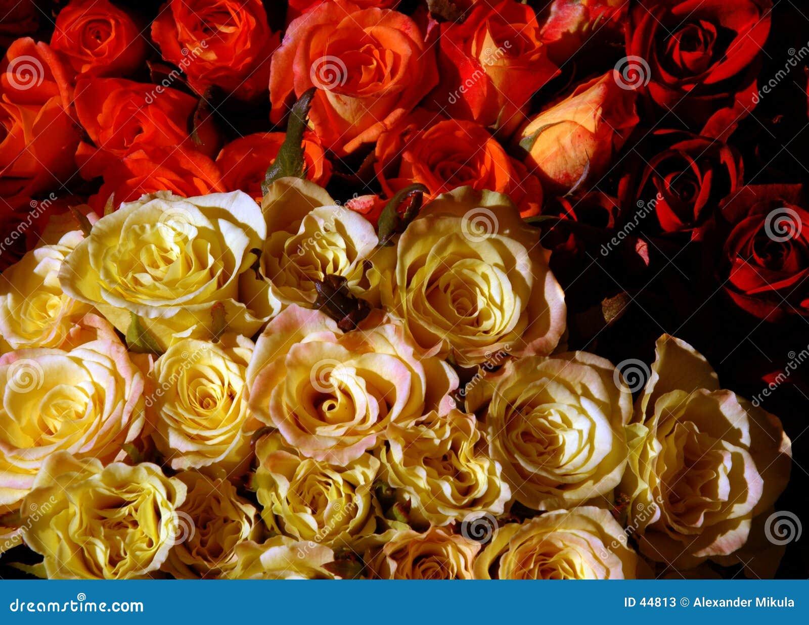 Download Ramo de rosas imagen de archivo. Imagen de color, ramo, manojo - 44813