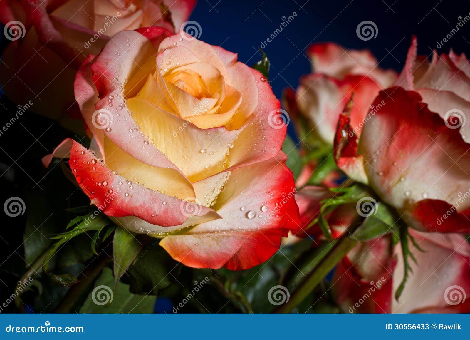 Ramo de rosas hermosas fotos de archivo imagen 30556433 - Ramos de flores bonitos ...