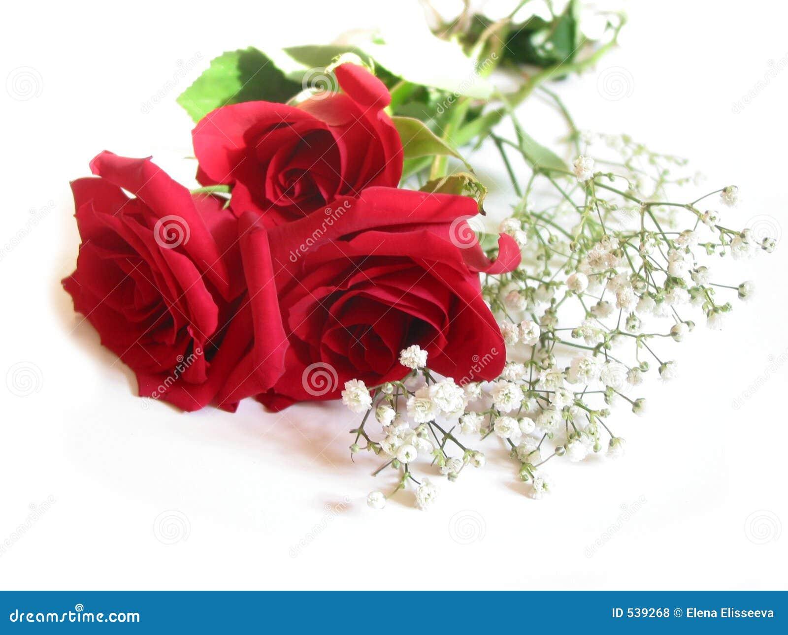 Ramo de Rose en blanco