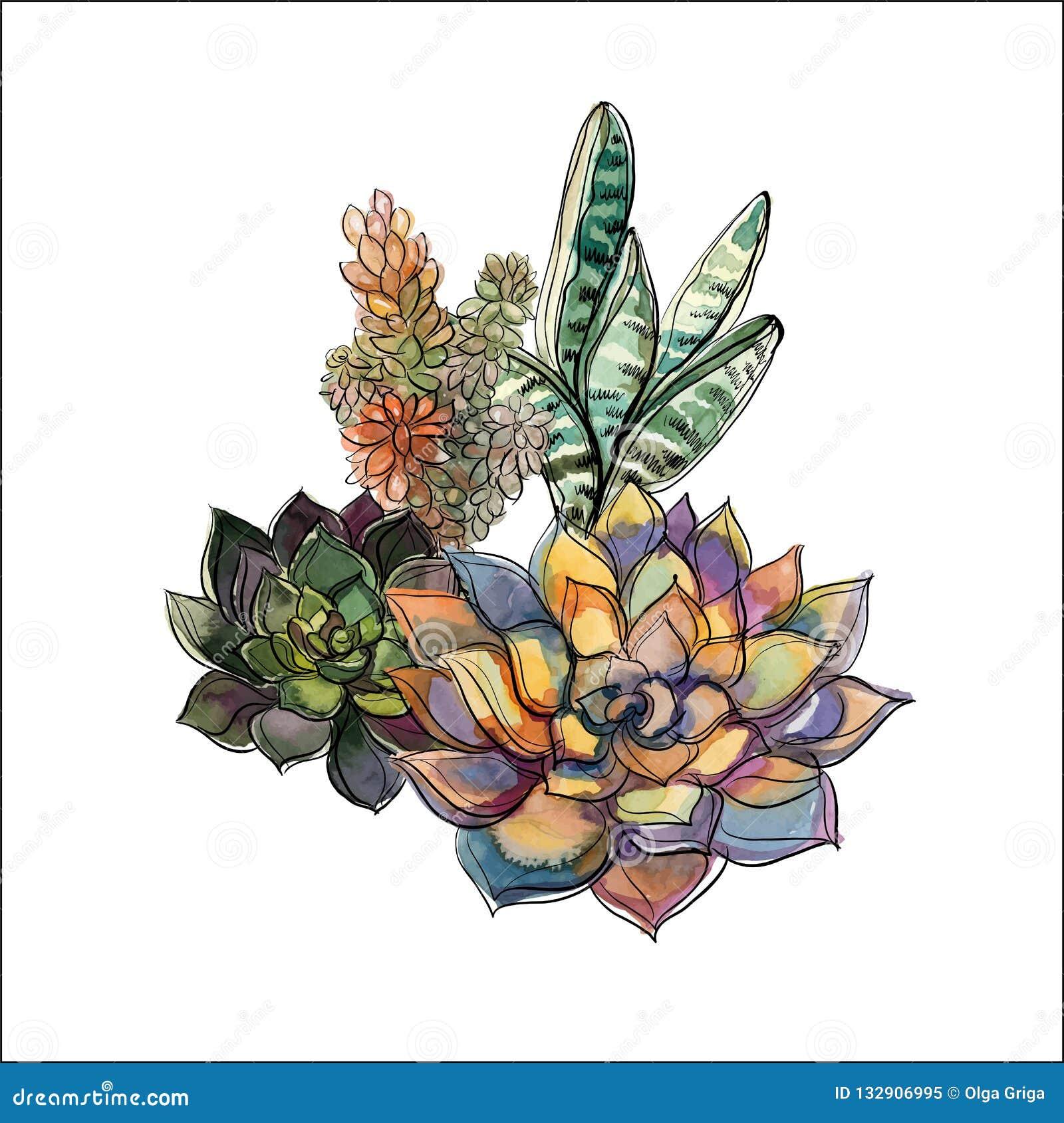 Ramo de succulents Centro de flores para el diseño watercolor gráficos Vector