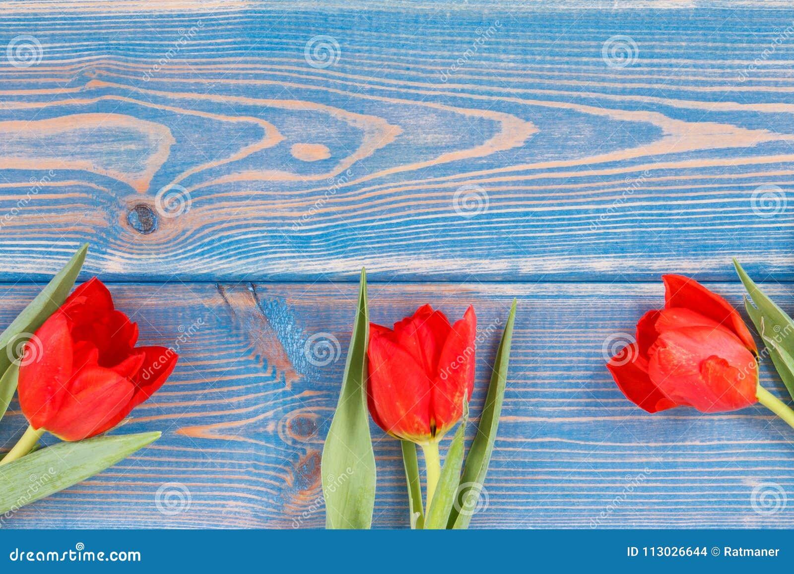 Ramo de tulipanes frescos en tableros azules, espacio de la copia para el texto