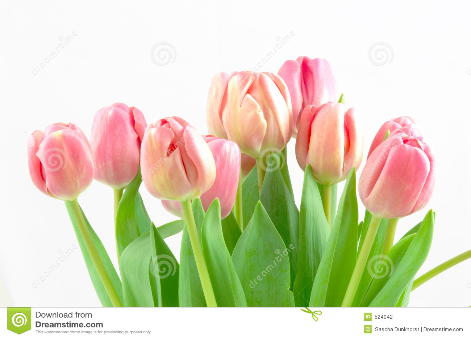 Ramo del tulipán