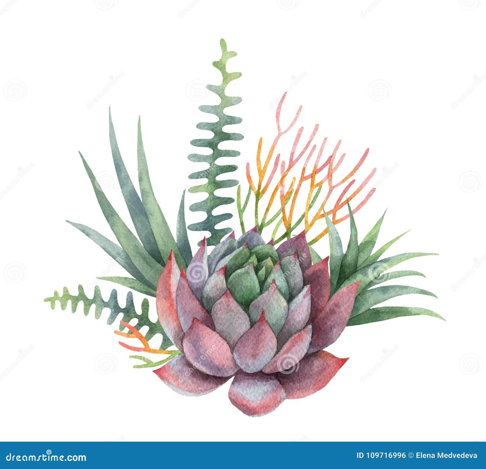 Ramo Del Vector De La Acuarela De Cactus Y De Plantas