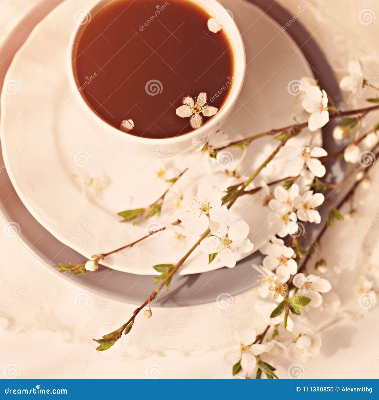 Ramo delicado de la cereza con la taza de coffe/