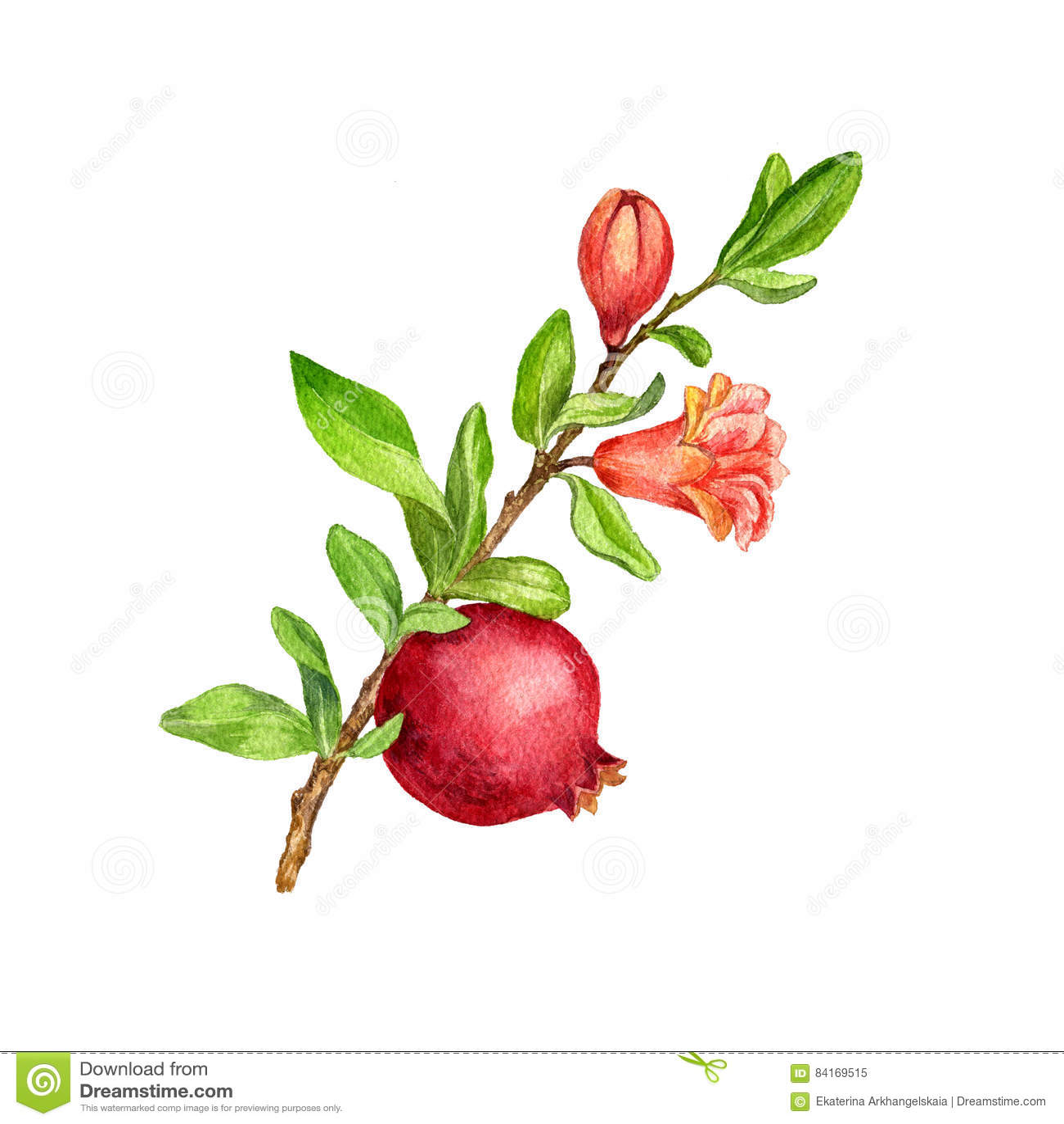 Ramo dell 39 albero da frutto con le foglie il fiore ed il for Albero da frutto nano