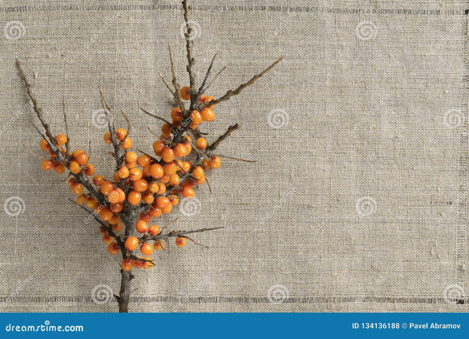 Ramo dell olivello spinoso