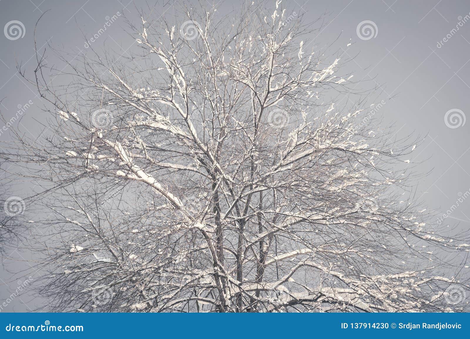 Ramo di albero congelato nel parco o nella foresta con la brina del ghiaccio e della neve sull immagine nebbiosa fredda di notte