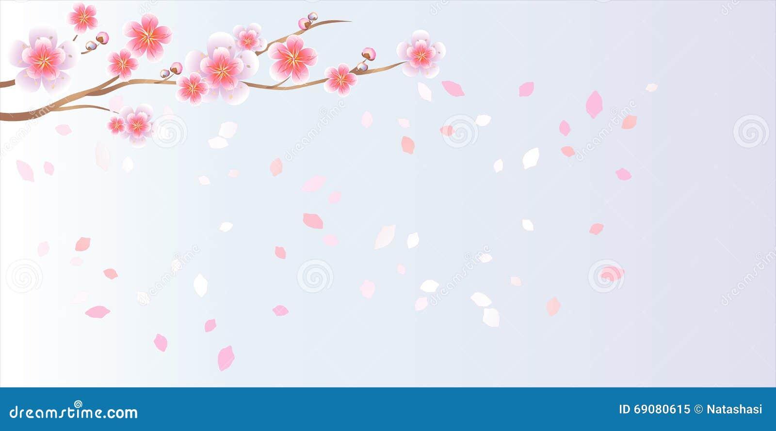 Ramo di sakura con i fiori Ramo del fiore di ciliegia con i petali