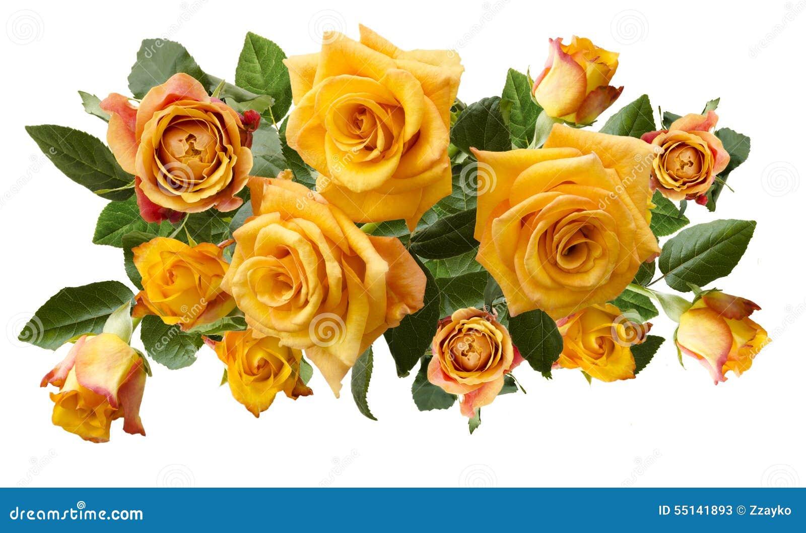 Ramo hermoso de rosas anaranjadas amarillentas aisladas en el fondo blanco foto de archivo - Significado rosas amarillas ...