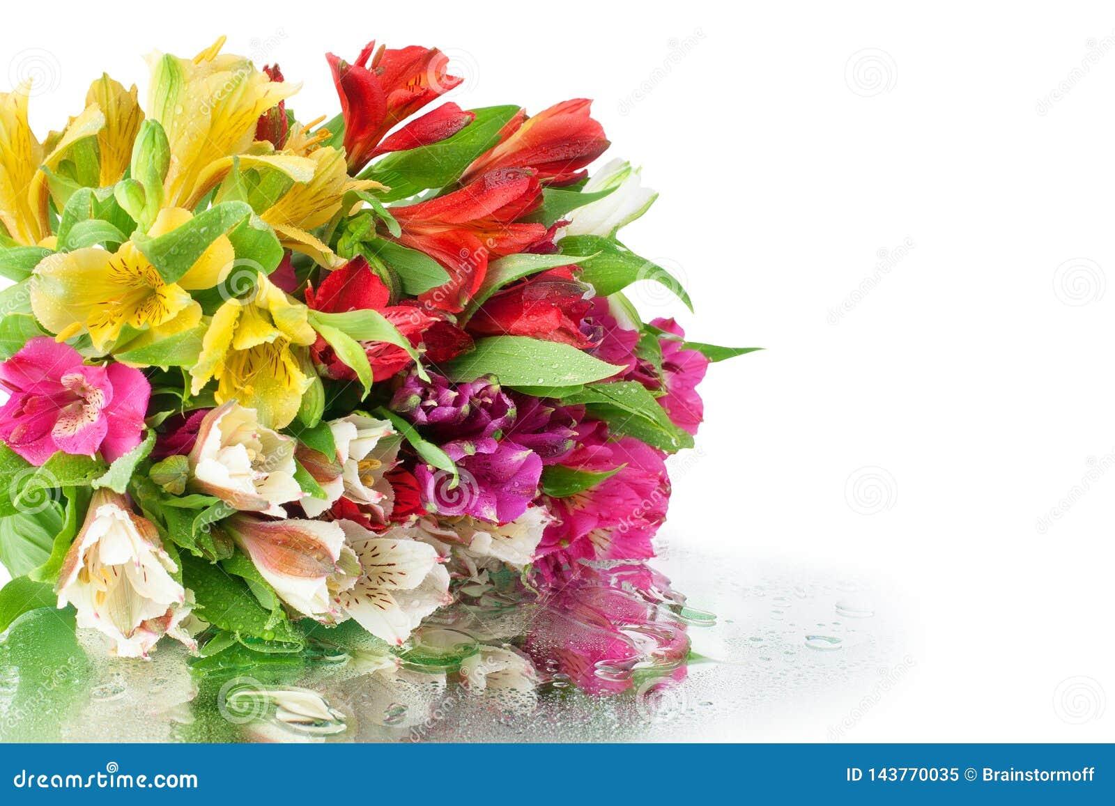 Ramo multicolor de las flores del alstroemeria en el fondo blanco del espejo en descensos del agua aislado cerca para arriba