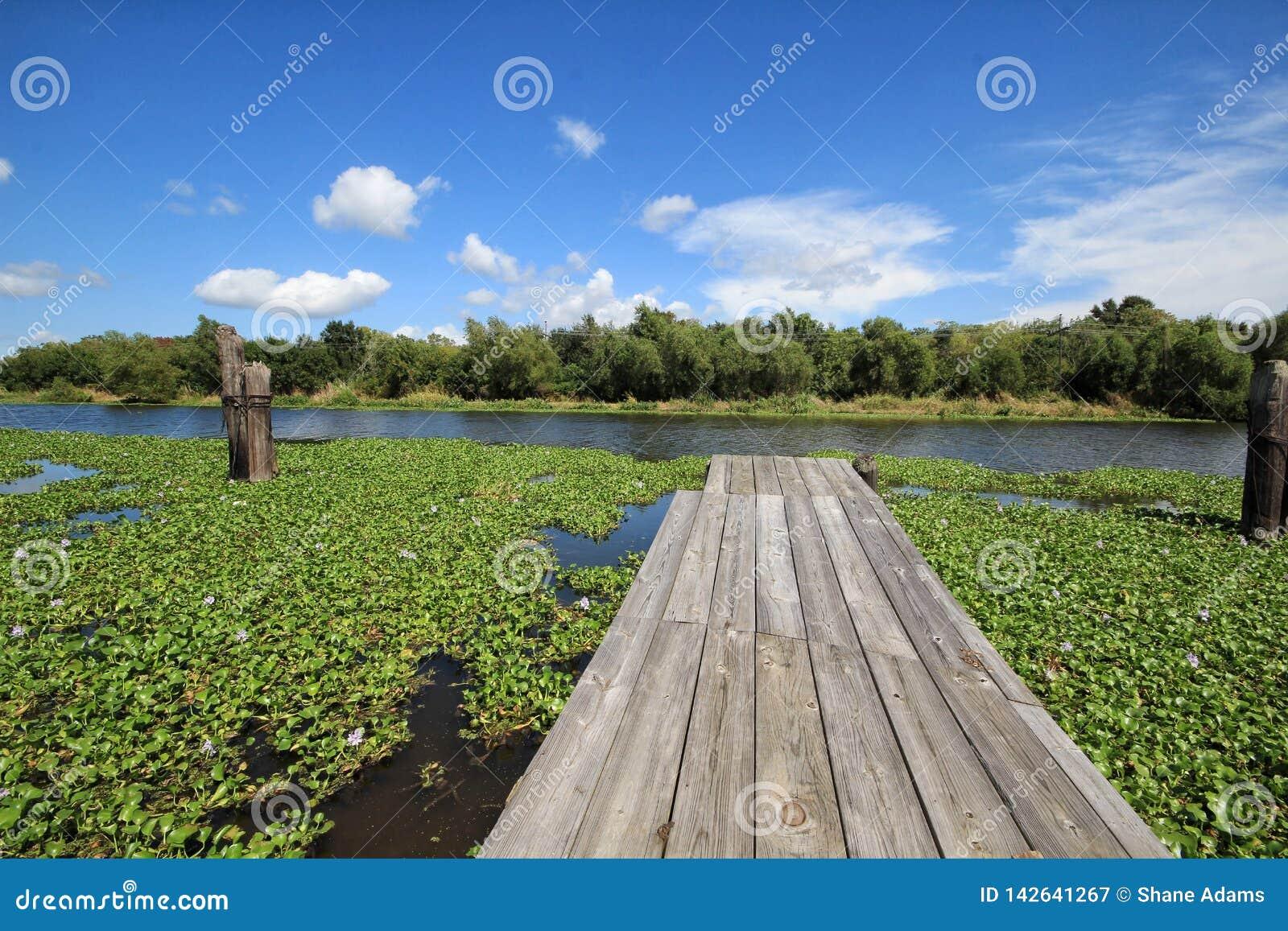 Ramo paludoso di fiume Lafourche, Luisiana